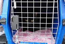 Trapped Spayed Released