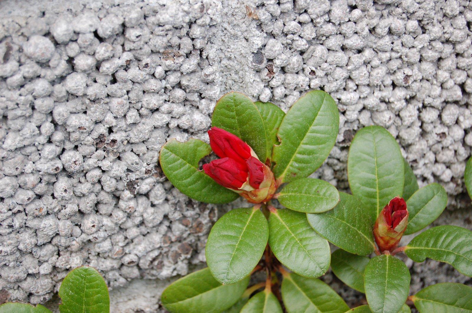 [The+Gardener]