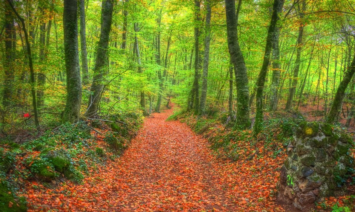 Spanish Forests Landscape