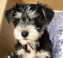 My Puppy Harry