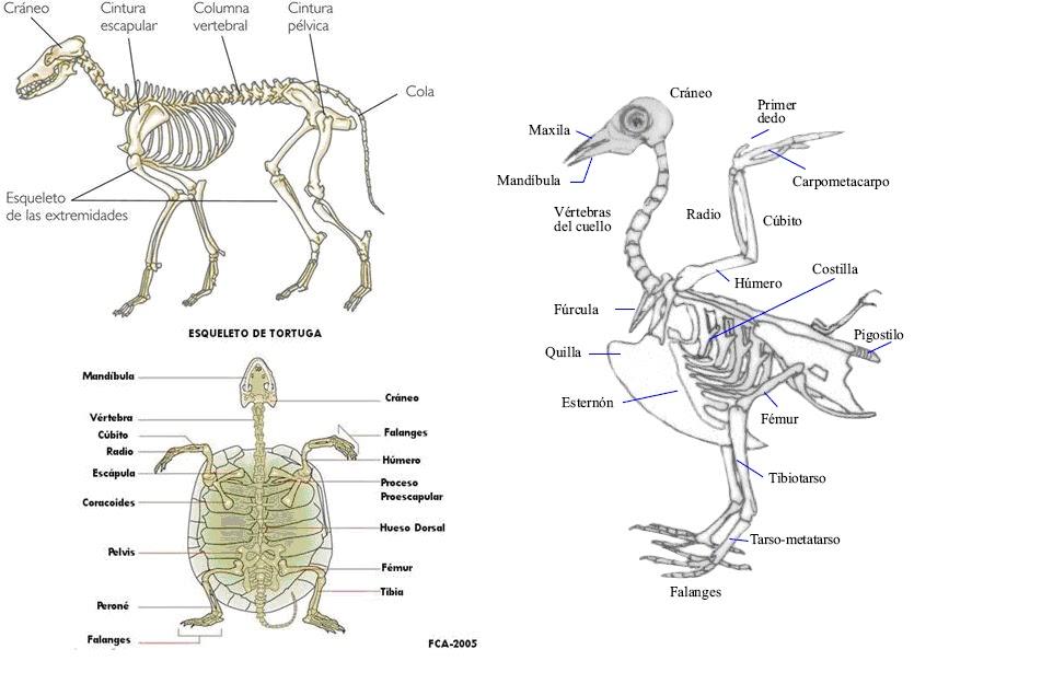 animales vertebrados: ¿Cómo se diferencian los animales vertebrados ...