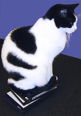 black and white cat perching on stack of dvds
