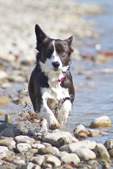 4458171690 c01cc536a7 o >Luna {Running Wild}   Adopted!