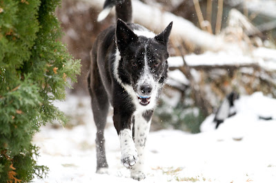 Lily+snow 15 >Fetching Machine