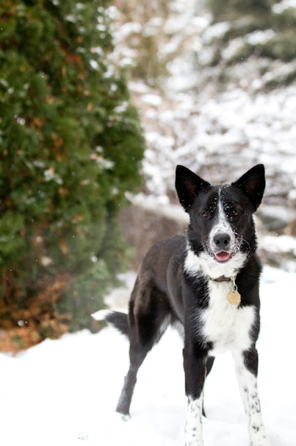 Lily+snow 20 >Fetching Machine