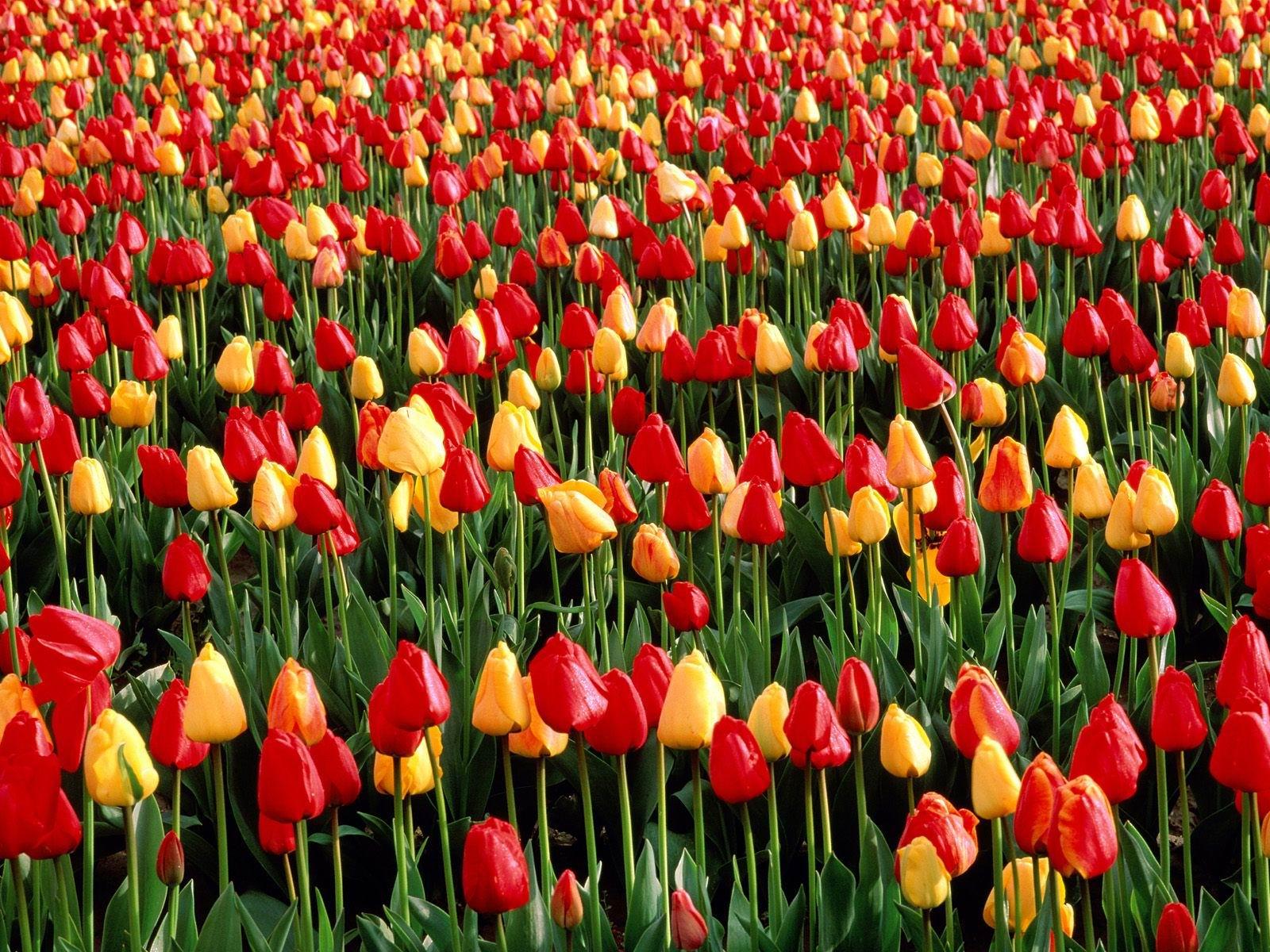http://2.bp.blogspot.com/_FFkA14ggsBk/SjEPFsagAbI/AAAAAAAAAAM/qx7s9aP20FY/S1600-R/kwiaty08.jpg
