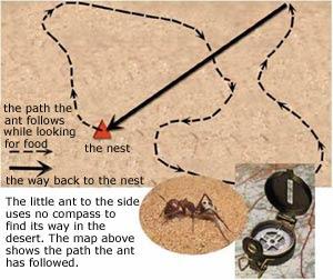 sistem navigasi semut