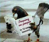merpati aja baca buku