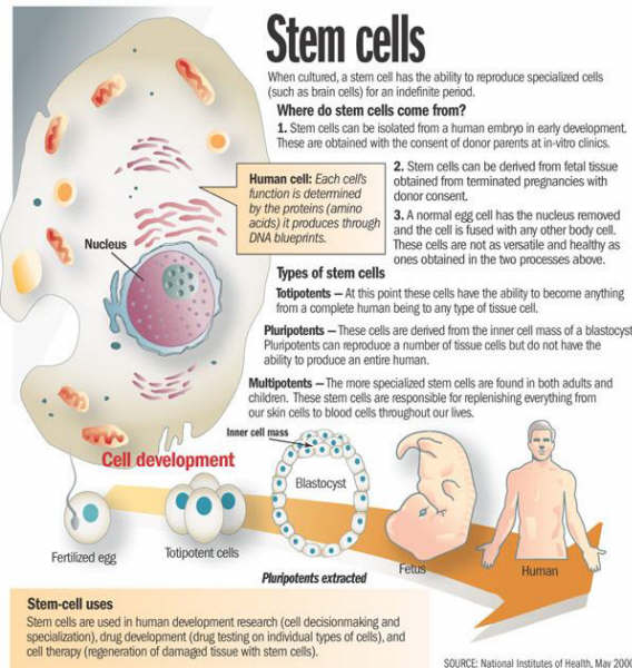 the possible capabilities utilizing stem cell research To join our stem cell research team at evotec's headquarters in hamburg, germany the successful candidate will support the industry scale production of human induced pluripotent stem cells (ipsc) and lead research activities with the ipsc core team.