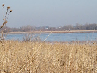 The creek feeding the marsh allowed for an area of open water, giving some Canadian Geese a place to rest.