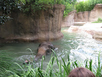 Swimming elephant, St. Louis Zoo