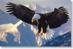 Victoria Eagles