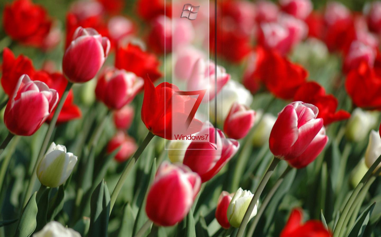 http://2.bp.blogspot.com/_FNQgkfCwYxs/TDoBHmH3v_I/AAAAAAAACnI/yqf18_S8g2U/s1600/Wallpaper+destop+W7+Flowers+Glass+(by+donycorreia).jpg