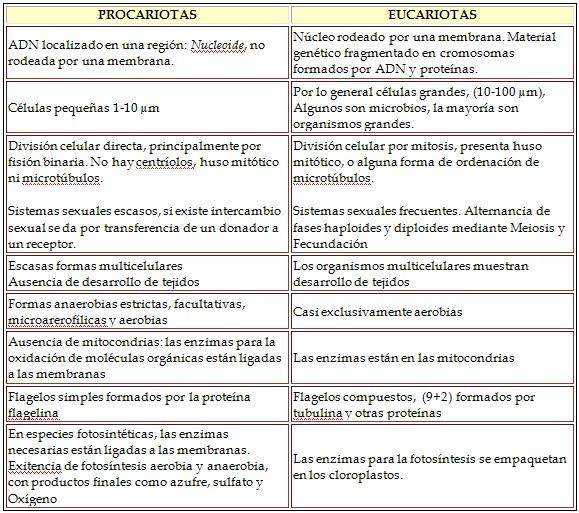 Pin Comparativo Entre Celula Eucariota Y Procariota 10 Gif Pelautscom