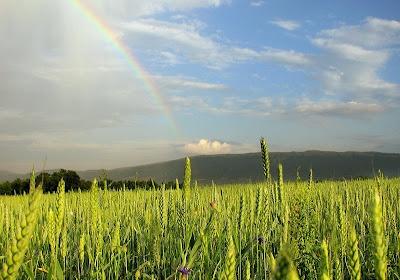 Rainbow, Дъга