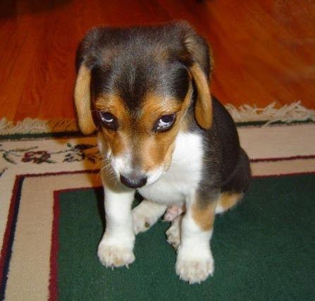 http://2.bp.blogspot.com/_FOIrYyQawGI/TKExCsps2tI/AAAAAAAADBg/pJax7CugkOw/s1600/Puppy.jpg