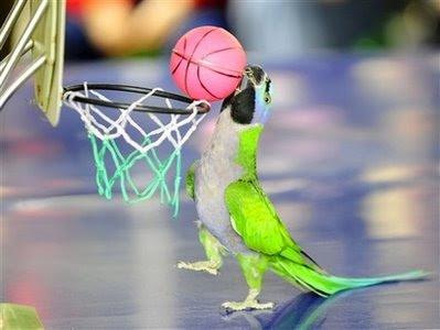 pets: parrot