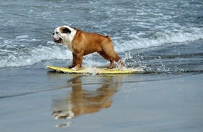 pets: surfer dog.