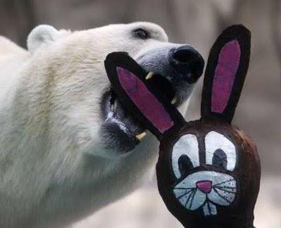 Animal: polar bear.