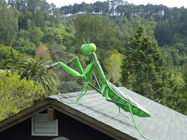 A Praying Mantis Is Overlooking The Botanical Garden In Berkeley From The  Roof Of A Small Building. The Garden Is Beautifully Situated In The Hills  Between ...