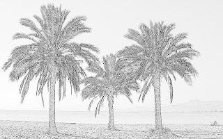 Palmes grises