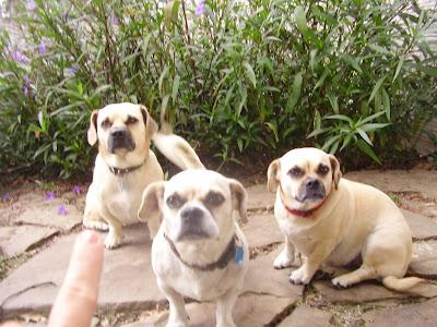 Chill Weenie Dogs