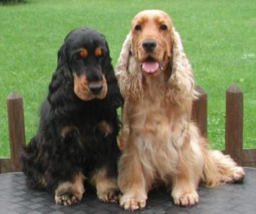 Razas de perros (1º Parte)