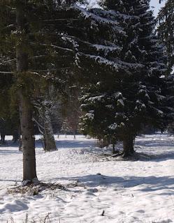 Grabhügel im Forstenrieder Park