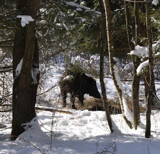 Wildschwein im Forstenrieder Park