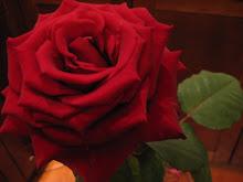 różyczka dla odwiedzających:-))