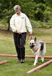 Gentle Trainer Dog Collar