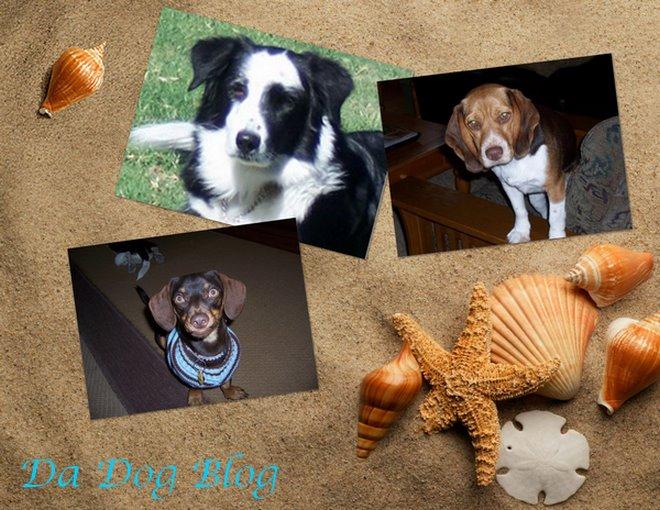 Da Dog Blog