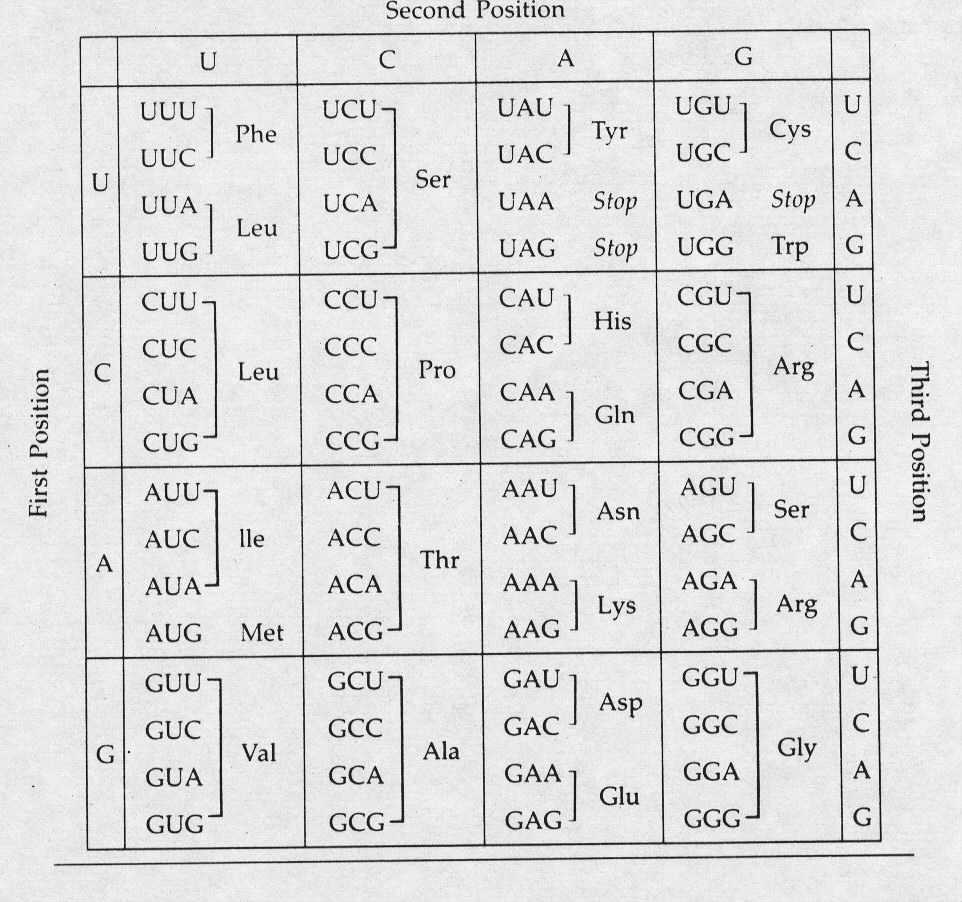 codon chart diabetes inc