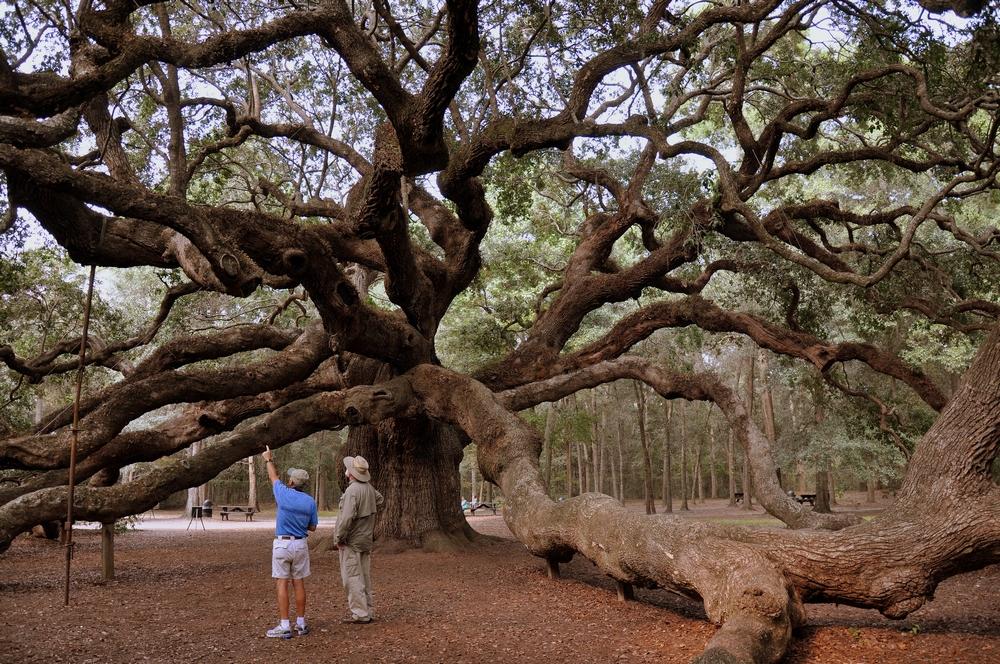 What Makes Its Home Angel Oak