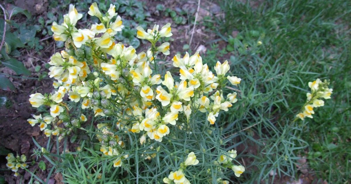La biodiversit de mon jardin ou comment pr server et for Les plantes du jardin