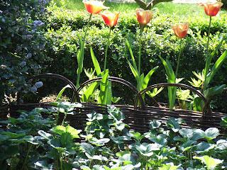 La biodiversit de mon jardin ou comment pr server et for Cendres dans le jardin