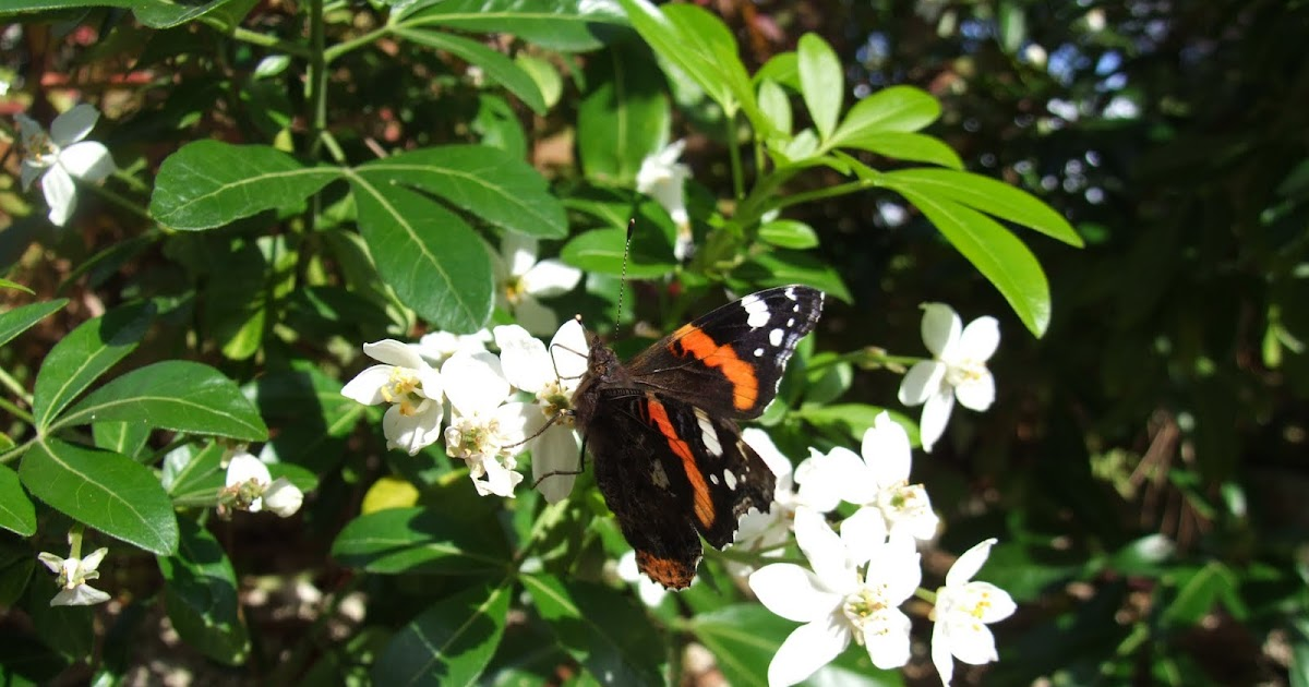 La biodiversit de mon jardin ou comment pr server et - Comment attirer les papillons dans son jardin ...