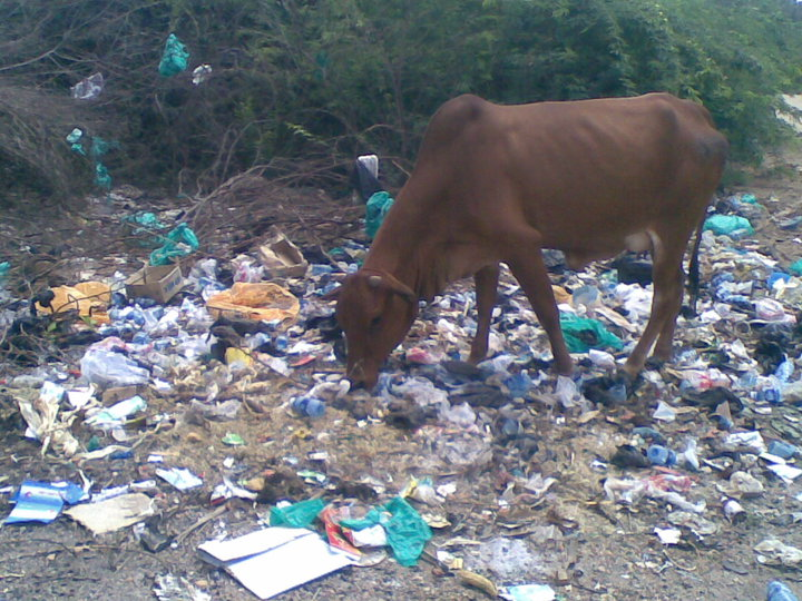 impact of waste accumulation on environment
