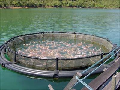 Revelan que salmonicultura en chile usa 600 veces m s for Jaulas para cria de peces