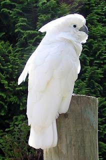 albino bird