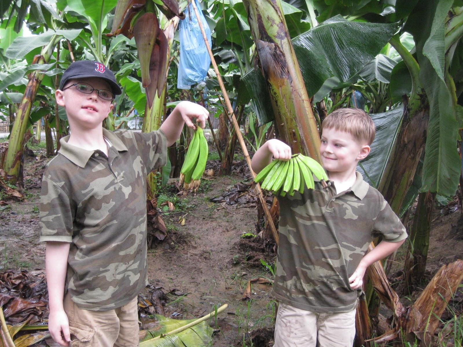 Discovering God's World Abeka Science Reader Grade 1