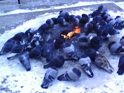 Pigeon Campfire