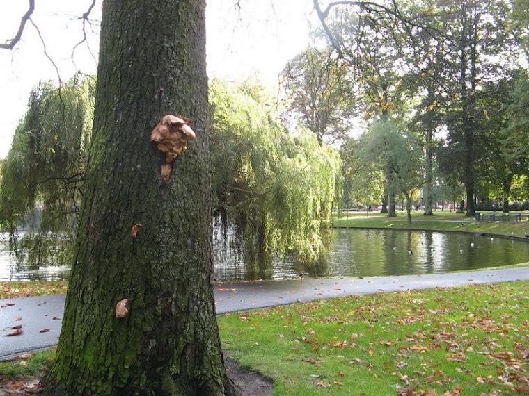 Hongos en árbol