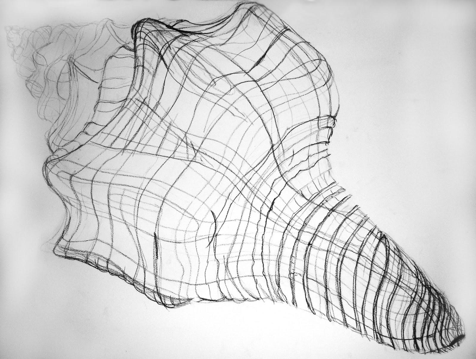 Contour Line Drawing Shell : Beau hestekin shell drawing in class