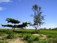 dunas e restingas em Ilhéus