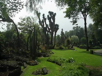 Blog de ariadna jardines botanicos de la ciudad de m xico for Vivero el botanico