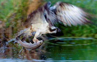Animal Seen On www.coolpicturegallery.us