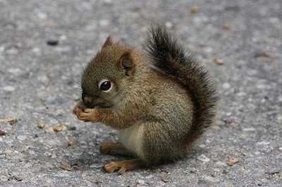 Tiny Adorable Animal Seen On www.coolpicturegallery.us