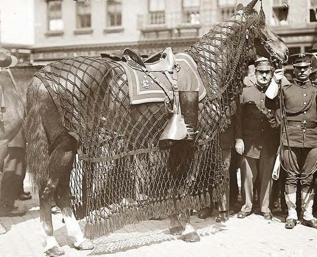 Pres.Grant's horse at his funeral ~
