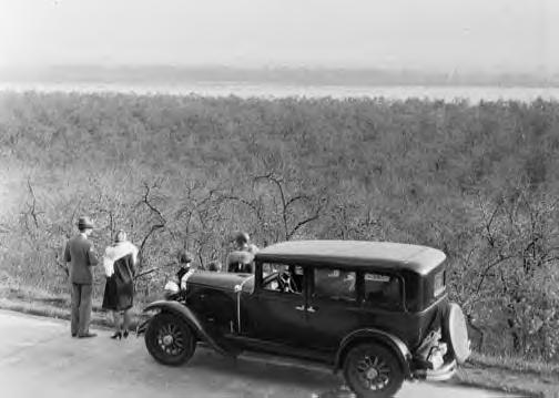 Hupmobile Century 6 Sedan. Prune orchard in Clark Cty., Oregon. 4-8-1929